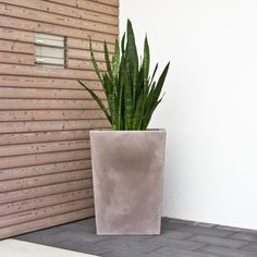The flowerpot LARGO M is made of plastic and has a matt surface in beige. Find more plastic plant pots here: https://www.planters-online.co.uk/planters-plastic-flower-pots/.
