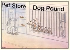 Such a strong picture. Please adopt, don't shop!!!