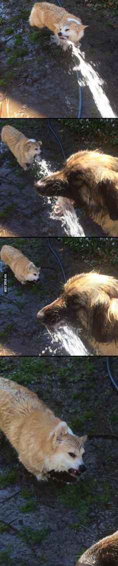 Drinking from the hose