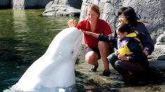 Participate in a full, interactive training session alongside Aquarium trainers and discover the fascinating behaviours of our beluga whales first-hand in this once-in-a-lifetime experience. Vancouver Aquarium, Animal Makeup, Stanley Park, Water Animals, Close Encounters, Sea Otter, Sea Creatures, Make Me Smile, Wildlife