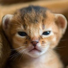 Baby Lion <3