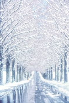 This road lined with snow covered trees Winter Wallpaper, Scenery Wallpaper, Fantasy Landscape, Winter Landscape, Beautiful Nature Wallpaper, Beautiful Landscapes, Winter Pictures, Nature Pictures, Winter Photography