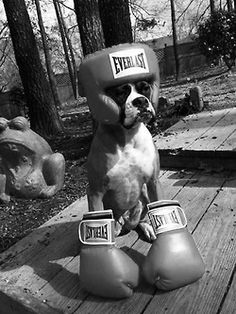 """A """"boxer"""".  Too cute.  Thanks, Sunny!!"""