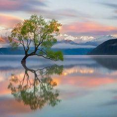 Lake Wanaka, New Zealand - Karen Plimmer Mother Nature finds A Way! Amazing Photography, Landscape Photography, Nature Photography, All Nature, Amazing Nature, Beautiful World, Beautiful Images, Lake Wanaka, Jolie Photo