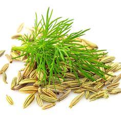 Die Wirkung und Anwendung von ätherischem Fenchelöl: Das aus Fenchel-Samen gewonnene ätherische Öl wirkt entkrampfend und entblähend, blutreinigend, entwässernd und entschlackend ...