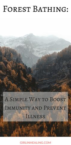Forest Bathing: A Simple Way to Boost Immunity and Prevent Illness