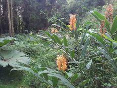 jardin jungle karlostachys, 2013