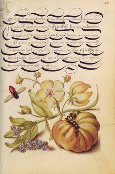 Mira calligraphiae monumenta: A Sixteenth-century Calligraphic Manuscript inscribed by Georg Bocskay and Illuminated by Joris Hoefnagel.