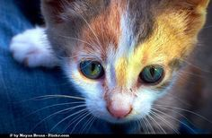 Purina Pro Plan #MyGreatCat campaign helps feed rescue cats in need! - 4 The Love of Animals