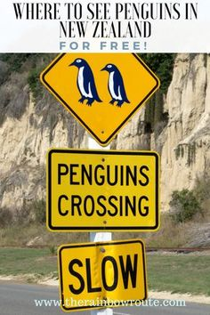 Where to See Penguins in New Zealand For Free - The Rainbow Route Travel Advice, Travel Guides, Travel Tips, Travel Destinations, Travel Deals, Budget Travel, Visit Australia, Australia Travel, Melbourne Australia