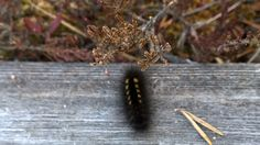 Spring time in Finland: butterfly worm
