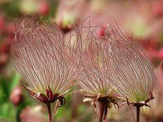 prairie wildflower tattoo - Google Search