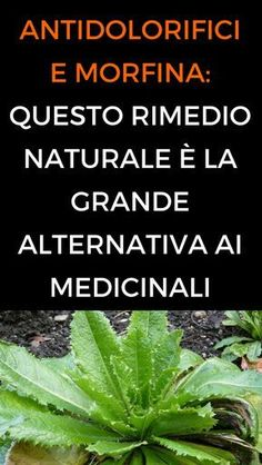 #lattugaselvatica #rimedinaturali #antidolorifici #animanaturale Home Remedies, Natural Remedies, Sciatica, Reflexology, Kefir, Kraut, Natural Health, Plant Leaves, Health