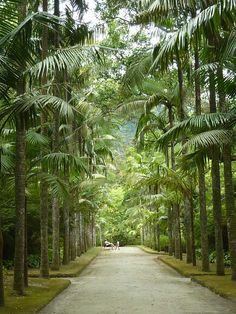 Parque de Terra Nostra, Furnas, São Miguel, Açores, Portugal