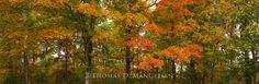 Colors of the Ozarks - $595.00