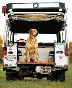 For the December/January cover shoot, golden retriever Rimi sits ready on a 1972 Land Rover Series III near Ridgeland, South Carolina. Vw Bus, Land Rover Defender Camping, Land Rover Models, Adventure Car, Best 4x4, Camping Car, Camping Ideas, Expedition Vehicle, Dog Car