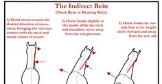 (click image to view full size)         Like the Direct Rein , the Indirect Rein, also known as a Neck Rein or Bearing Rein, is a simple  u...
