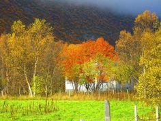 norway autumn photos   Free Beautiful Autumn, Norway Wallpaper - Download The Free Beautiful ...
