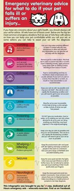 Emergency advice if your pet is sick or hurt