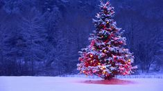 We have collection of most beautiful Christmas Nature wallpapers. Nature has extraordinary beauty in Christmas time. Having a Christmas Nature wallpaper on your desktop will always get you in good mood and many will like how your monitor looks like.