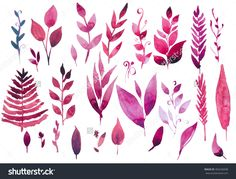 Watercolor herbs, leaves and flowers on white background. Hand drawn illustration of red herbs and plants
