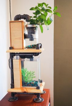 Grow Mint Indoors All Year Round!