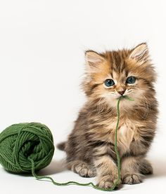 Viral Daisy The Kitten Cat Photos