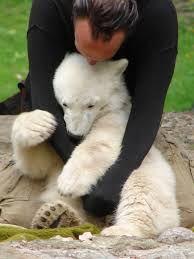 bear cub - Buscar con Google