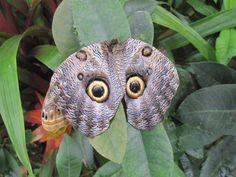http://ueberschriftennews.blogspot.com/2012/06/steinwerk-ambiente-eine-steinwand.html  owl butterfly