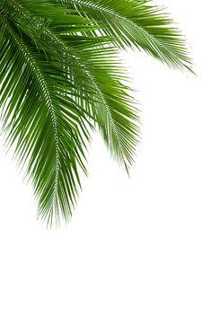 Phone Screen Wallpaper, Tree Wallpaper, Green Wall Decor, Tropical Art, Leaf Art, Mandala Art, Picture Wall, Printable Wall Art, Palm Trees