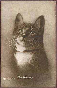 1902 Cat Portrait Postcard ~ The Princess ~ Signed Bullard ~ Sheahan of Boston ~ Nice Gold Beveled Edge ~ Kitten ~ 1296P