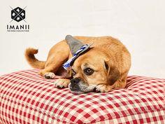 IMANII the dog collection - BAVARIAN IMANII - Hundekissen, Hundebett, Dogbed / Oktoberfest, Wiesn _ European design for dogs! www.imanii.com