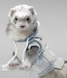 Ferret Hoodie Sweatshirt - Stylish Ferret Apparel - Pet Shopping Blog for Modern Pet Owners - CoolPetProducts.com