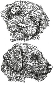 Online center for machine embroidery designs. On this site you can find machine embroidery designs in the most popular formats, with a new free machine embroidery design each month. Free embroidery projects, tips and tutorials are also available. Best Embroidery Machine, Free Machine Embroidery Designs, Applique Designs, Advanced Embroidery, Learn Embroidery, Border Embroidery, Embroidery Patterns, Tattoo Perro, Lagotto Romagnolo