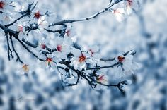 Spring is coming by Hernan Bua on 500px