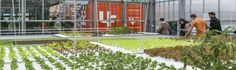 Since 2013, we operate UF001 LokDepot as our first commercial aquaponic rooftop farm. Based in the Dreispitz area south of Basel, just a few tram stops from the heart of the city, we operate a 250m2 rooftop greenhouse with fresh fish and healthy vegetables.