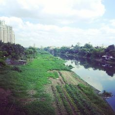 #citiesdiscovered -Agricuture Invades the City, Pasig city Photo by Instagram user: amitaliri619