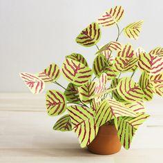 Corrie_Hogg_paper_plant_christia_obcordata_butterfly_stripe_plant_swallowtail.jpg