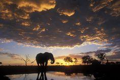 Cosas que hacer en Botswana, sin necesidad de matar elefantes