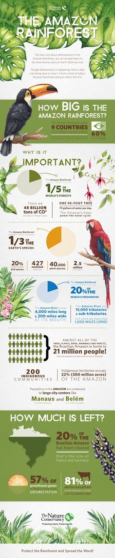 Amazon Rainforest Infographic | The Nature Conservancy