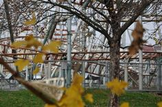 #design #prater #lunapark #montagnerusse #rollercoster #vienna #walldecor #alemeacci @alemeacci  www.alessandrameacci.it