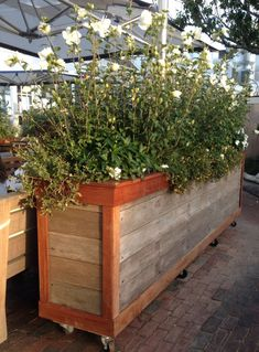 Moveable large privacy planter, perfect for screening on balconies or decks when privacy is a concern-large rolling wheels makes this ideal also for patios or porches! Large Outdoor Planters, Deck Planters, Balcony Plants, Porch Planter, Rustic Planters, Privacy Planter, Privacy Screen Outdoor, Raised Planter Boxes, Diy Planter Box