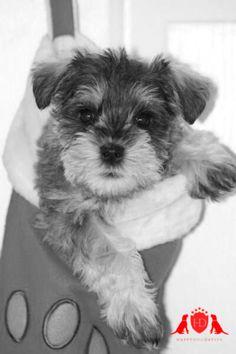 Happy Dog Day Spa | Nyon, Switzerland Toilettage pour chiens et accessoires pour animaux. Rue Juste Olivier 3 1260 NYON 022 362 2154 www.happydogdayspa.ch