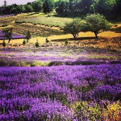 Vineyard, Tours, Painting, Outdoor, Instagram, Outdoors, Vine Yard, Painting Art, Paintings