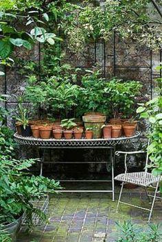 So pretty. Outdoor Garden Space / Greenhouse / plants
