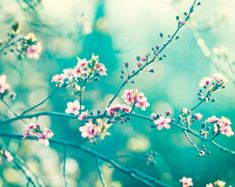 """Teal Photography - turquoise aqua blue wall art pink nursery white flower nature print floral branches mint photograph, """"A Piece of My Soul"""""""
