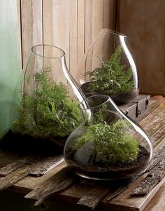 Lately I've really wanted to create a terrarium...  I'm not sure where I'd put it though!