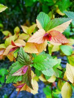 """三月里@叶de魅惑 [遇见]Cornus/ Dogwood Tree: """"似花还似非花""""  ~《西江月》 (宋)苏轼  点点楼头细雨,重重江外平湖。 当年戏马会东徐,今日凄凉南浦。  莫恨黄花未吐,且教红粉相扶。  酒阑不必看茱萸,俯仰人间今古"""