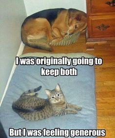 Generous cat…