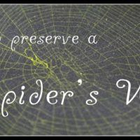 How+to+Preserve+a+Spider's+Web